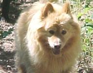 hond honden dogs dog care verzorging